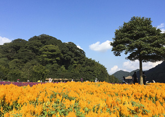 广州婚纱摄影景点-石门国家森林公园