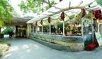 沙面玫瑰园西餐厅-沙面玫瑰园-户外5